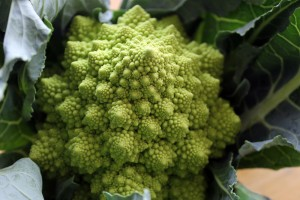 CSA Highlight: Romanesco